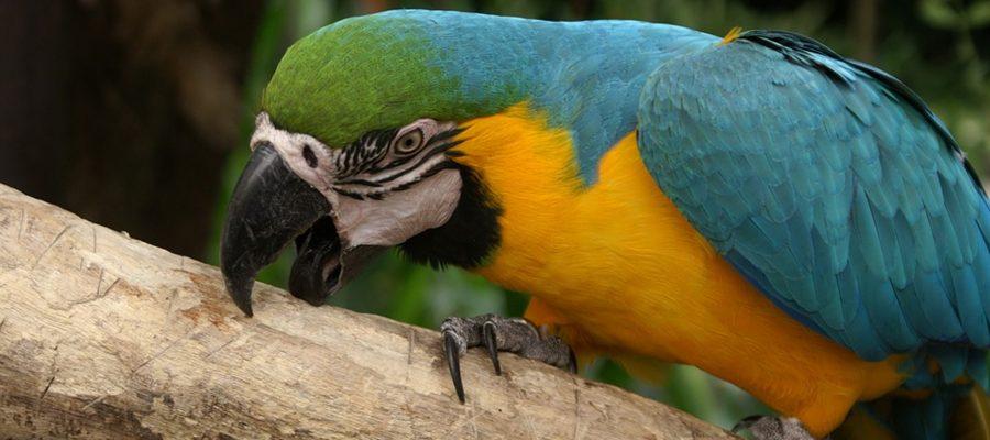 Agresivitatea la păsări de companie