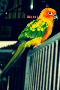 Îngrijirea păsărilor de companie