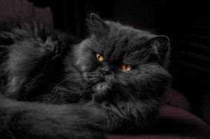 Foto artistica pisica